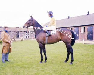 Royal Frolic with J Burke (675-02)